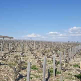 Viñedos de Pichon Lalande